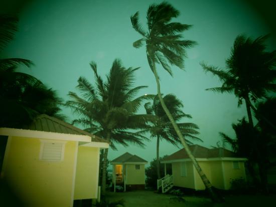 Joe Jo's By The Reef: Swaying Palms