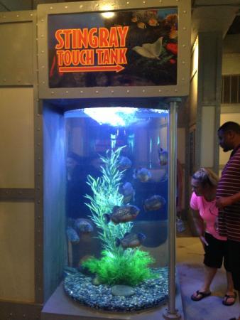 Small Aquarium Picture Of Kemah Boardwalk Kemah