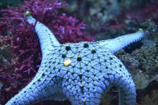 201 toile de mer picture of aquarium de vannes vannes tripadvisor