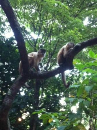 Parque Areião: Macaco