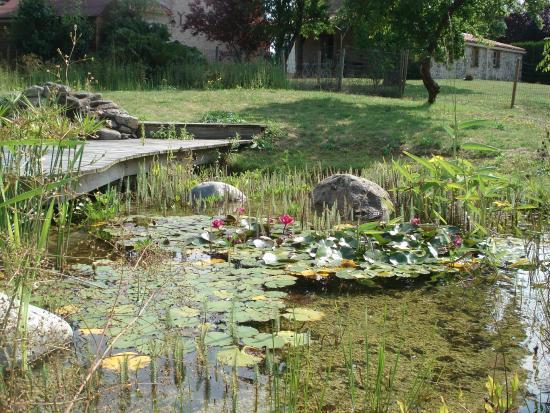 Gite Nature : vue sur la piscine naturelle, les plantes qui filtrent l'eau