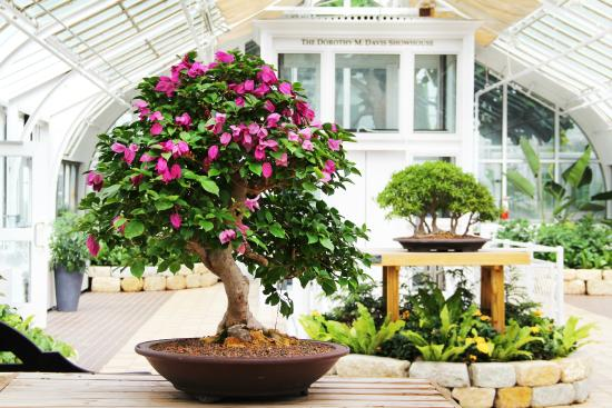 Bonsai At Franklin Park Conservatory And Botanical Gardens Picture Of Franklin Park Conservatory And Botanical Gardens Columbus Tripadvisor