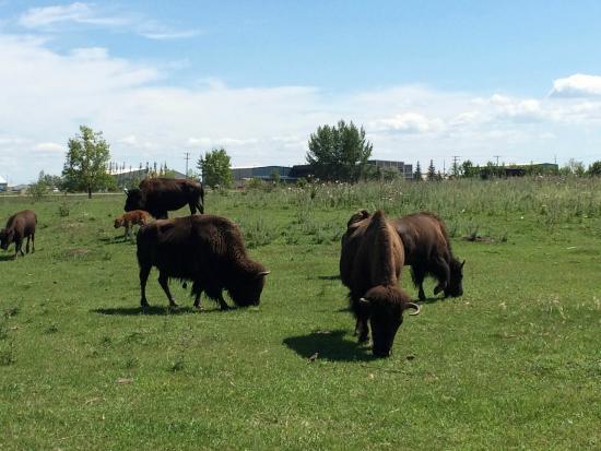 EVRAZ Family Park and Pool: Buffalo