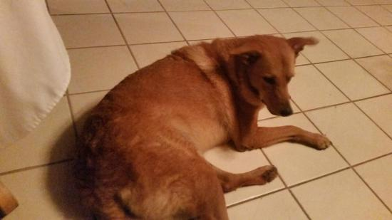 Thatch Caye, a Muy'Ono Resort: Dewey-the island dog