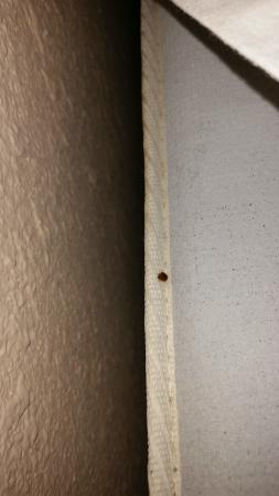 The Consulate Hotel: one of many bedbugs we found in the bed