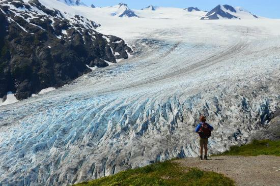 Overlooking Exit Glacier from the Harding Icefield Trail Picture