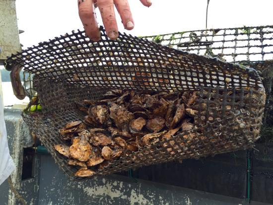 Yarmouth, Kanada: Eel Lake Oyster Farm