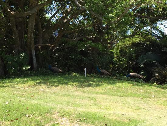Risonare Kohamajima Country Club