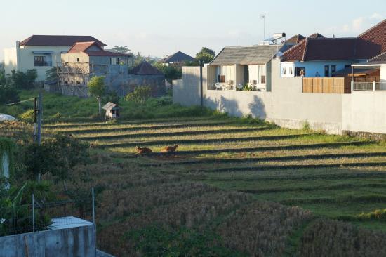 Echoland: vue de la terrasse sur le toit