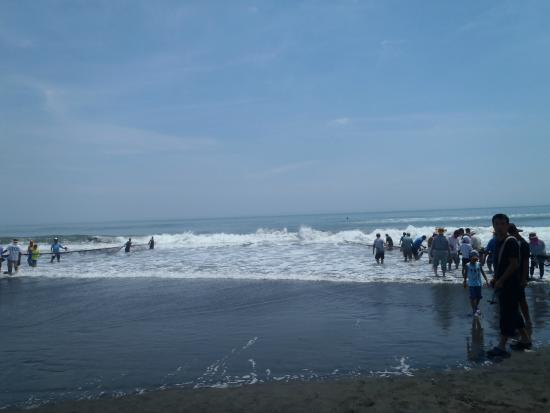 Shirako Beach: 段々と左右の距離や陸と海に仕掛けた網との距離がちじまってきました