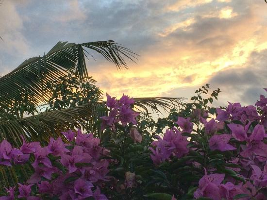 Baramba House: Sunset view