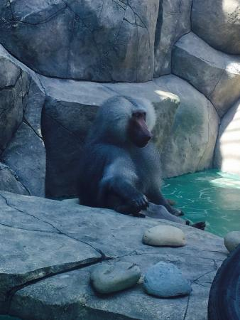 Balu Zoo