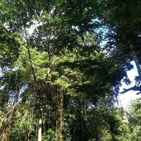 Latugu Homestay Ubud: jungle view
