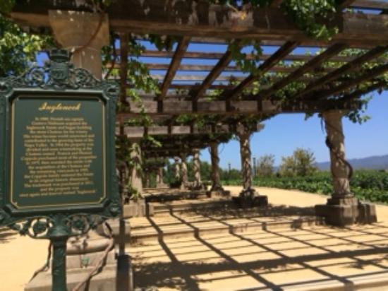 Rutherford, Kalifornien: Walkway under the grape vines