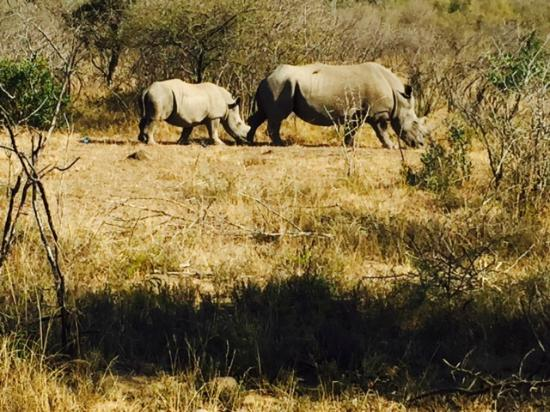 The Fever Tree Guest House: Rhinos (Hluhluwe NP)