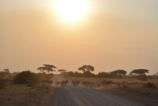 Robanda Tented Camp : Near the Serengeti gate about 10 minutes from the camp