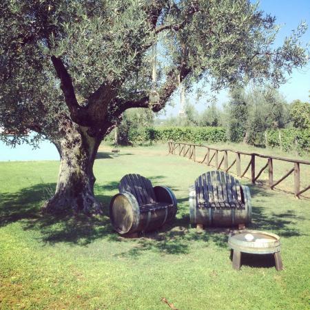 Agriturismo Villa Borgeri: Giardino