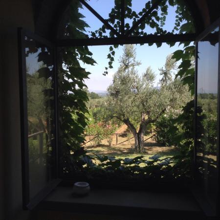 Agriturismo Villa Borgeri: Vista sul giardino