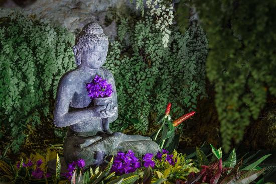 Shiva's Cave Yoga Studio - Monte Placido