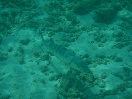 Divi Dive Bonaire: Diving and snorkeling in Bonaire
