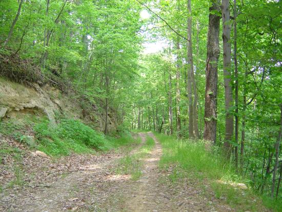 Boundary Road Ksf Picture Of Kanawha State Forest Charleston Tripadvisor