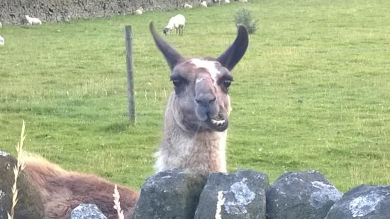 Packhorse Farm Camp Site: Saw this guy on the walk down to the pub