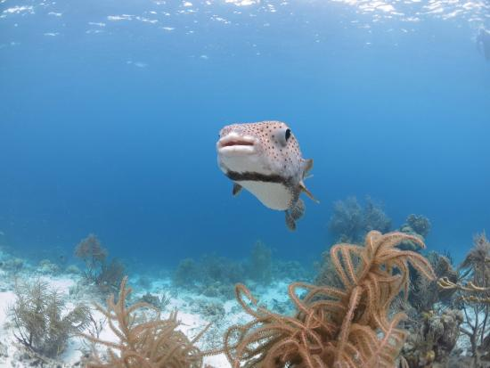Diving and snorkeling in bonaire picture of divi dive bonaire kralendijk tripadvisor - Dive e divi ...