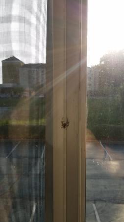 Quality Inn & Suites Huntsville : Nice spider to greet me