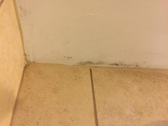 Embassy Suites by Hilton Hotel & Montgomery Conference Center : This mold was in the shower on the ceiling. Housekeeping never cleaned room while I was there.