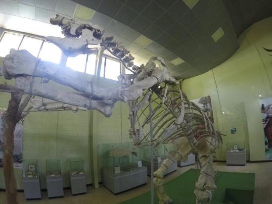 Zacapa, Guatemala: Esqueleto de perezoso de la era de los dinosaurios