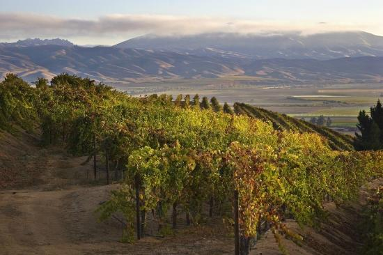 Paraiso Vineyards by Smith Family Wines