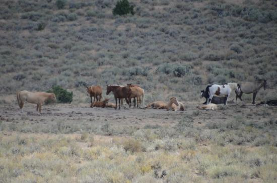 Princeton, OR: Wild horse herd