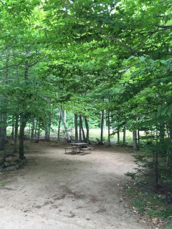 Crawford Notch General Store and Campground: Low hanging limbs in RV sites