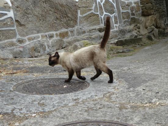 Casa Grande de Cristosende: ホテルの外にいたネコちゃん