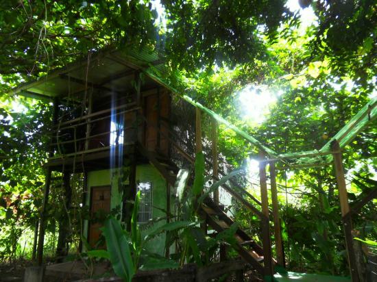 Hospedaje Ecologico Nahual: welcome to the jungle!