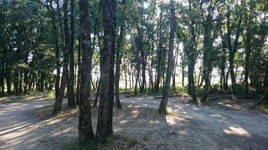 Le Mas De Fanny : Forêt de chênes