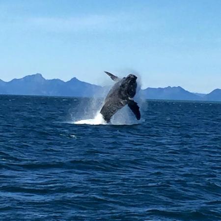 Dive Alaska