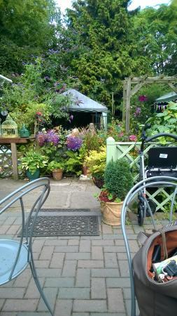 Foto de Mimosa Tea Garden