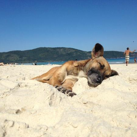 Lopes Mendes Beach : levando uma vida de cão em praia lopes mendes rsrs