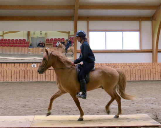 Eld Hestar Horseback Tours : Demonstrating the Icelandic Horses 5 gaits