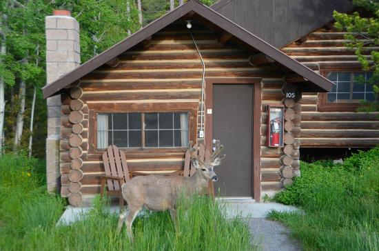 Signal Mountain Lodge: You never know who you'll see at your front door.