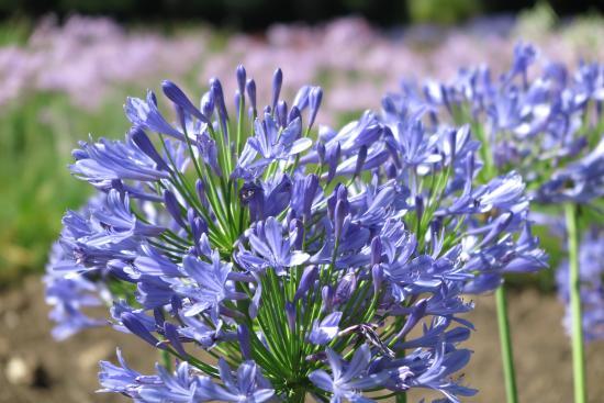 Hya plantas flores rboles una preciosidad picture for Plantas de un jardin botanico