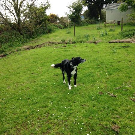Elysian Fields: Breezy walk in the meadow