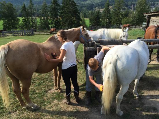 Vavenby Trail Rides: German visitors enjoying the grooming oppotunities! :)