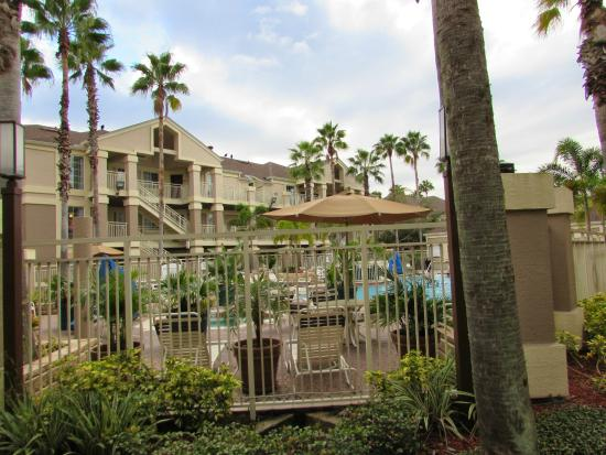 Pool picture of staybridge suites lake buena vista for Pool show orlando 2015
