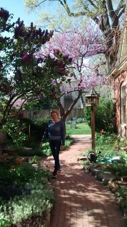 Briar Rose Bed and Breakfast: RedBuds ABLOOM in side garden