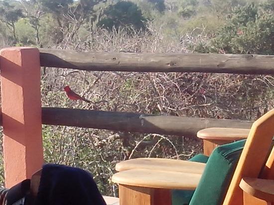 Baja Bungalows: El café de la mañana