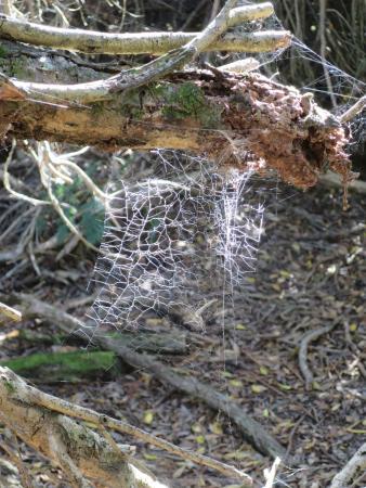 แทสมาเนีย, ออสเตรเลีย: Web