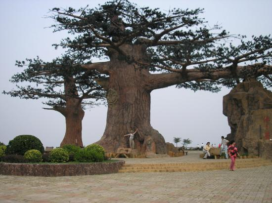 Haizhiyun Park : Огромный баобаб
