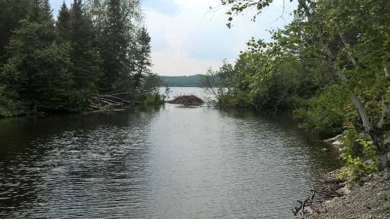 Ely, MN: Beaver lodge, east end of trail